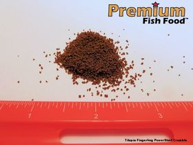 Tilapia PowerStart Fingerling Crumble 10 lbs